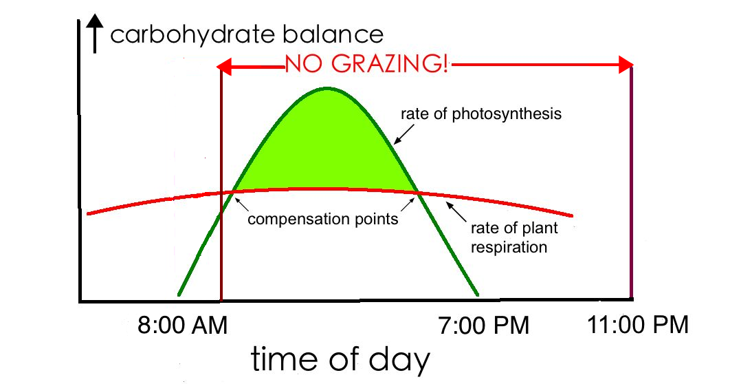 rate of photosythesis